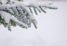 Branche de sapin d'enneigement au jour d'hiver photographie stock libre de droits