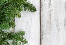 Branche de sapin Nobel sur les conseils en bois blancs rustiques Image libre de droits