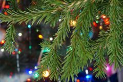 Branche de sapin sur le fond des lumières colorées Photo libre de droits
