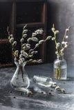 Branche de saule dans un vase en verre images libres de droits