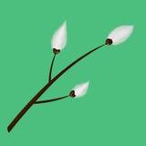 Branche de saule de chat illustration stock