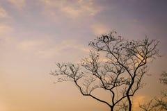 Branche de silhouette d'arbre images libres de droits