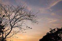Branche de silhouette d'arbre photographie stock