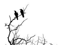 Branche de silhouette d'arbre et de corneille morts Images stock
