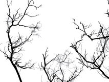 Branche de silhouette d'arbre mort d'isolement Photographie stock