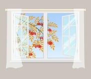 Branche de sorbe en dehors de la fenêtre Photo libre de droits