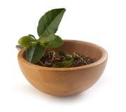 Branche de thé avec le thé sec Photographie stock