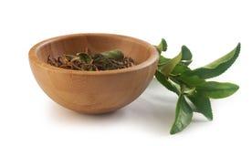 Branche de thé avec le thé sec Photo libre de droits