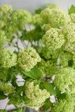 Branche de Viburnum avec les bourgeons verts dans le vase en verre Fond de vintage d'amour avec des fleurs Papiers peints pour le Images libres de droits
