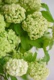 Branche de Viburnum avec les bourgeons verts dans le vase en verre Fond de vintage d'amour avec des fleurs Papiers peints pour le Image stock