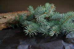 Branche del abeto del árbol de la naturaleza imagenes de archivo