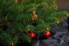 Branche del abeto del árbol de la naturaleza fotos de archivo libres de regalías