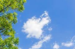 Branche des arbres et du ciel bleu avec des nuages Photos libres de droits