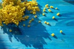 Branche des fleurs de mimosa en fleur Images libres de droits