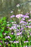 Branche des fleurs lilas avec les feuilles images libres de droits