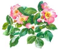 Branche des roses illustration libre de droits