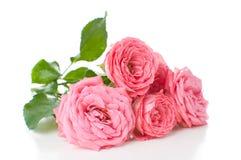 Branche des roses roses Photo libre de droits