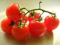 Branche des tomates mûres rouges Photographie stock libre de droits