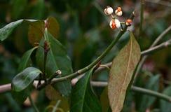 Branche di fioritura dell'albero fotografie stock