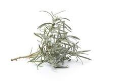 Branche di una pianta del curry Fotografia Stock Libera da Diritti