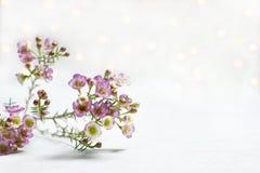 Branche du bokeh blanc de fond de petites fleurs photos stock