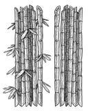 Branche en bambou, illustration de feuille, dessin, gravure, encre, schéma, vecteur illustration libre de droits