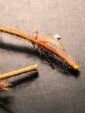 Branche en bois sèche Photo stock