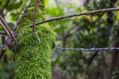 Branche et barbelé photo libre de droits