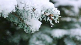 Branche et chutes de neige d'arbre de sapin banque de vidéos