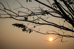 Branche et de coucher du soleil dos dedans Image libre de droits