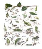 Branche et feuilles de thé avec le thé sec Image stock