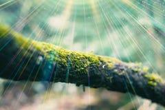 Branche et mousse dans la forêt avec le fond mou de tache floue Images stock