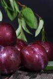 Branche feuillue de prunes rouges Photographie stock