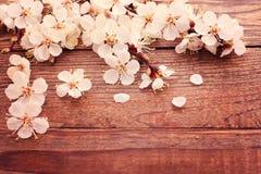 Branche fleurissante avec les fleurs sensibles blanches dessus Photo libre de droits