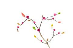 Branche fleurissante d'isolement sur le blanc photo libre de droits