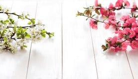 Branche fleurissante de ressort Image libre de droits