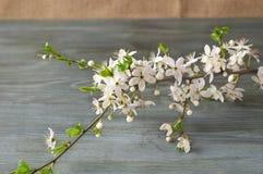 Branche fleurissante sur la texture de papier Style japonais de sabi de wabi Images libres de droits
