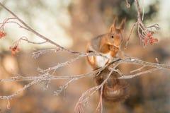 Branche froide Photographie stock libre de droits