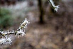 Branche gelée avec des transitoires de glace Photos stock