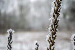 Branche gelée avec des transitoires de glace Image libre de droits
