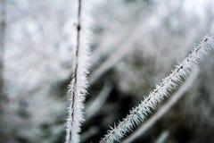 Branche gelée avec des transitoires de glace Images libres de droits