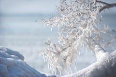 Branche gelée en hiver sur le fond de l'eau Image libre de droits