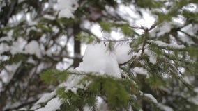 Branche impeccable dans la forêt d'hiver clips vidéos