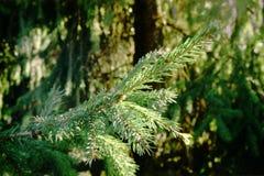 Branche impeccable un jour ensoleillé Photo libre de droits