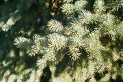 Branche impeccable un Sun lumineux Photo stock