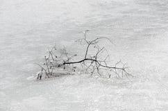 Branche isolée congelée sur le lac photos libres de droits