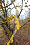 Branche jaune Photos stock