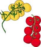 Branche, jaune et rouge de deux tomates illustration de vecteur