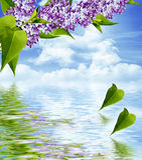 Branche lilas Photographie stock libre de droits