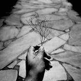 Branche magique photographie stock